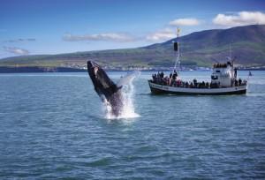 Walvis spotten 2
